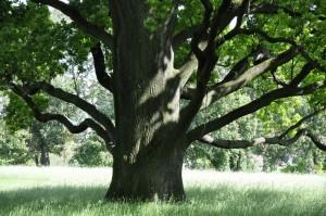Baum_28