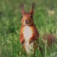 """Am 24.09.2013 hat Tomoko Arai (vielen K21 Freunden als Fotografin bekannt) ab 19:00 Uhr Freunde, Bekannte und Foto-/Tierliebhaber in das Stuttgarter Rathaus zur Vernissage der Fotoausstellung """"Faszination Rosensteinpark"""", dem dann auch viele (50-70) gefolgt sind, geladen."""
