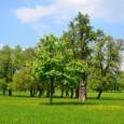 Pressemitteilung BUND Regionalverband Stuttgart Stuttgart, 18.10.2013 BUND fordert S21-Baumfällungen im Rosensteinpark auszusetzen Bahn fehlt noch Fällgenehmigung für Juchtenkäferbäume Von Dienstag, 22. Oktober bis Montag, 28. Oktober sollen im Zuge der […]