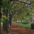 Im Rahmen der Neugestaltung des Stadtgartens in Stuttgart-Mitte informierte das Garten-, Friedhofs- und Forstamt am Dienstag, 22. Oktober, die Bürger. Die Infoveranstaltung fand vor der  Uni-Bibliothek im Stadtgarten statt.