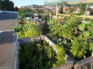 parkdeck gardening b 1